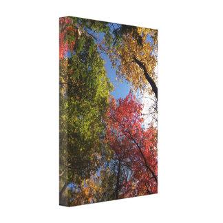 Hojas de otoño impresiones en lienzo estiradas