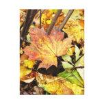Hojas de otoño - lona envuelta premio lona envuelta para galerias