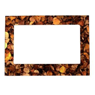 Hojas de otoño marcos magnéticos