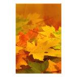Hojas de otoño papelería de diseño