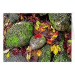 Hojas de otoño, piedras de campo, tarjeta de felic