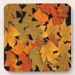 Hojas de otoño posavasos
