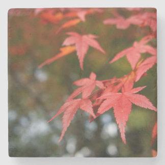 Hojas de otoño posavasos de piedra