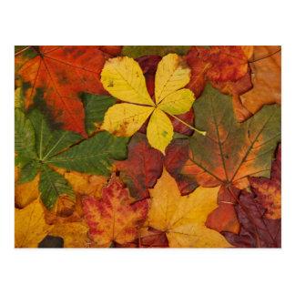 Hojas de otoño postal