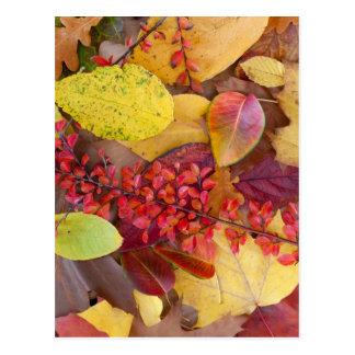 Hojas de otoño postales