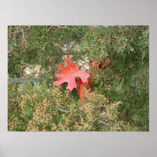 Hojas de otoño póster