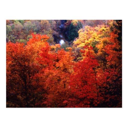 Hojas de otoño que cambian color postal