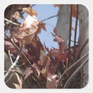 Hojas de otoño que recogen en árbol pegatina cuadrada