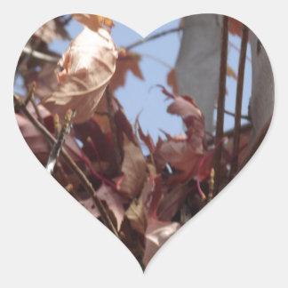 Hojas de otoño que recogen en árbol pegatina en forma de corazón