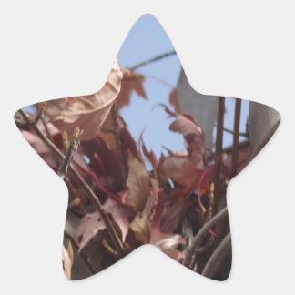 Hojas de otoño que recogen en árbol pegatina en forma de estrella