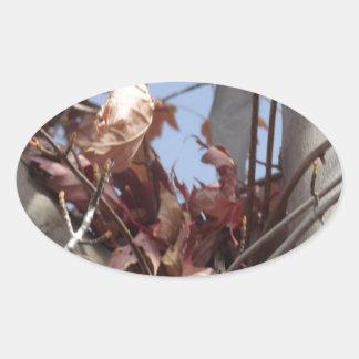 Hojas de otoño que recogen en árbol pegatina ovalada