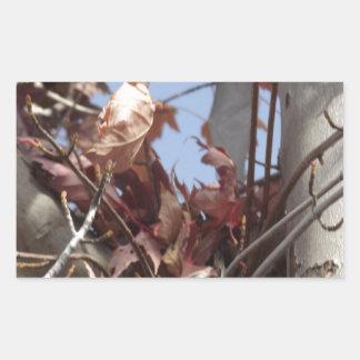 Hojas de otoño que recogen en árbol pegatina rectangular