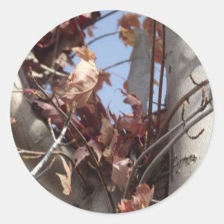 Hojas de otoño que recogen en árbol pegatina redonda