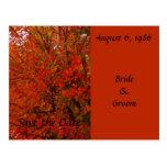 Hojas de otoño rojas brillantes tarjetas postales