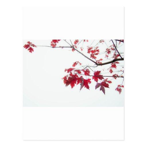 hojas de otoño rojas en una rama postales