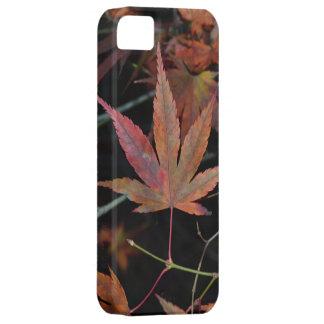 Hojas de otoño rojas iPhone 5 fundas