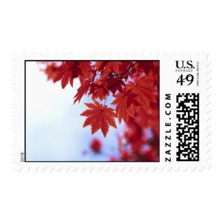 Hojas de otoño rojas sellos