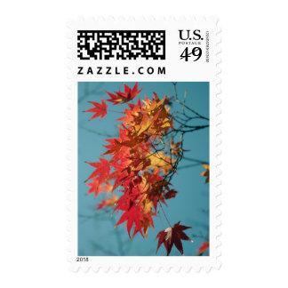 Hojas de otoño rojas y amarillas en un fondo azul sello