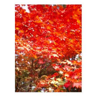 Hojas de otoño, Sapporo Tarjetas Postales