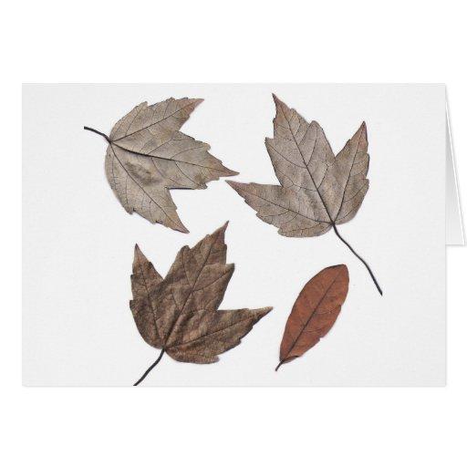 Hojas de otoño secadas tarjeta de felicitación
