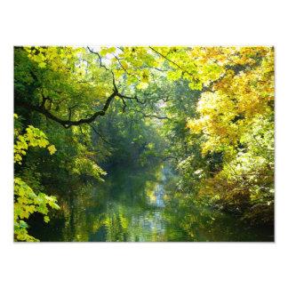Hojas de otoño sobre una corriente fotografia