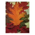 Hojas de otoño tarjeta postal
