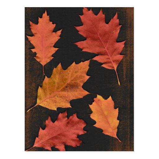 Hojas de otoño tarjetas postales