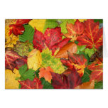 Hojas de otoño tarjeton