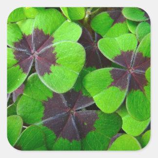 Hojas de Oxalis - rojo y verde Pegatina Cuadrada