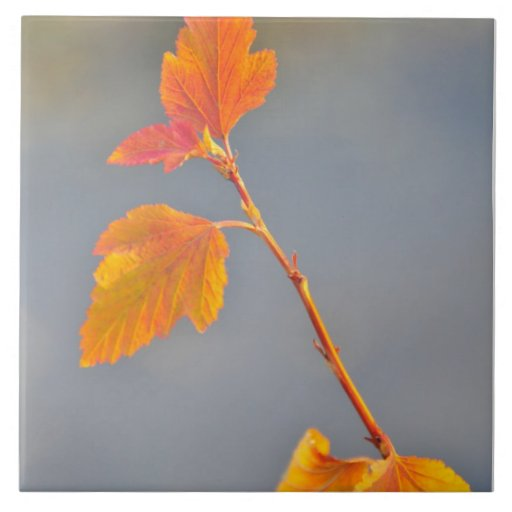 Hojas del amarillo del otoño azulejo cuadrado grande