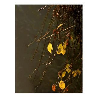 Hojas del amarillo en un día brumoso del otoño