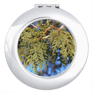 Hojas del árbol de cedro espejo compacto