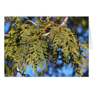 Hojas del árbol de cedro tarjeta de felicitación