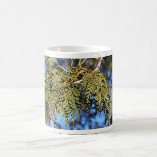 Hojas del árbol de cedro taza básica blanca