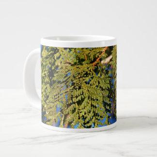Hojas del árbol de cedro taza grande