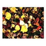 hojas del color tarjeta postal