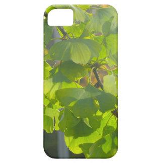 Hojas del Gingko en sol del otoño Funda Para iPhone SE/5/5s