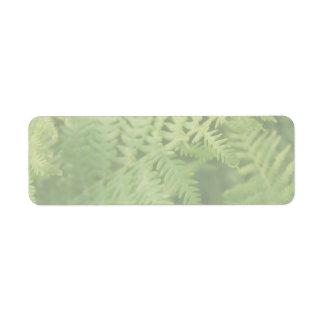 Hojas del helecho, verdes claras. etiqueta de remitente