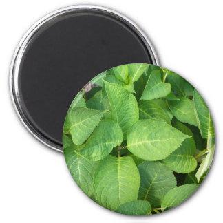 Hojas del hydrangea del verde vivo imán redondo 5 cm