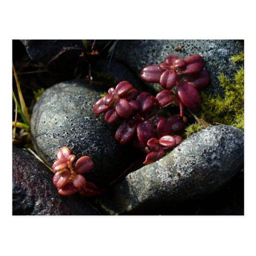 Hojas del Lingonberry - colores del otoño, Postal