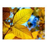 Hojas del oro en postal del otoño