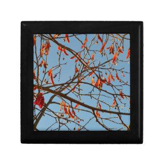 Hojas del otoño cajas de recuerdo