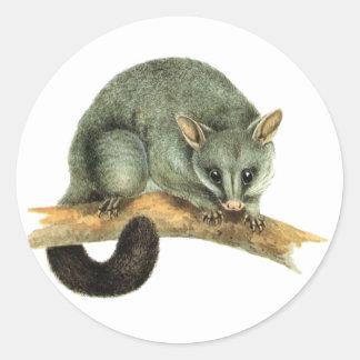 Hojas del pegatina - oposum cooroy