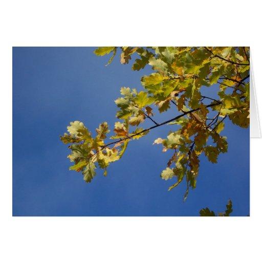 Hojas del roble contra un cielo azul tarjeton