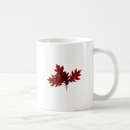 Hojas del roble rojo tazas de café