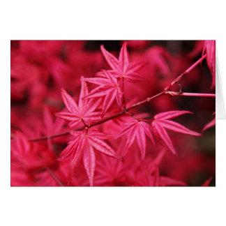 Hojas del rosa tarjeta de felicitación