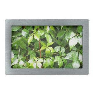 Hojas del verde con las gotitas de agua hebilla de cinturón rectangular