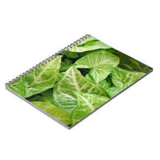 Hojas del verde con los modelos poner crema libros de apuntes con espiral