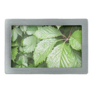 Hojas del verde de uvas salvajes con las gotitas hebilla de cinturon rectangular