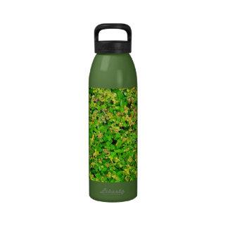 Hojas del verde del arbusto japonés del acebo botella de agua reutilizable